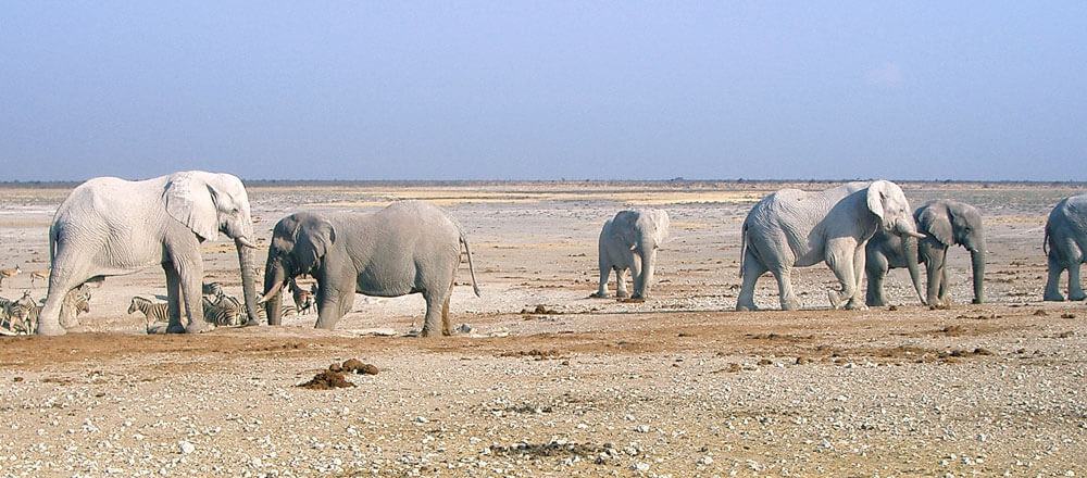 Etosha Nationalpark - Safaris in Namibias bekannten Nationalpark