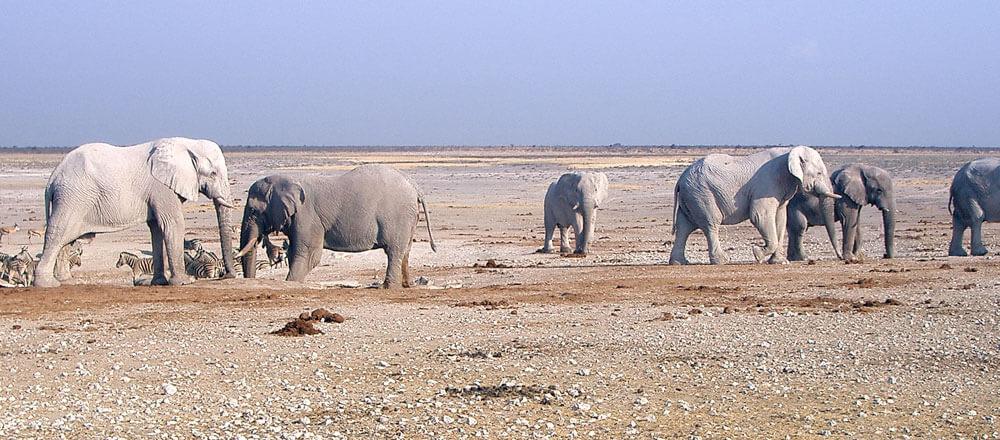 Safaris im Etosha Nationalpark - die großen Tiere Afrikas beobachten