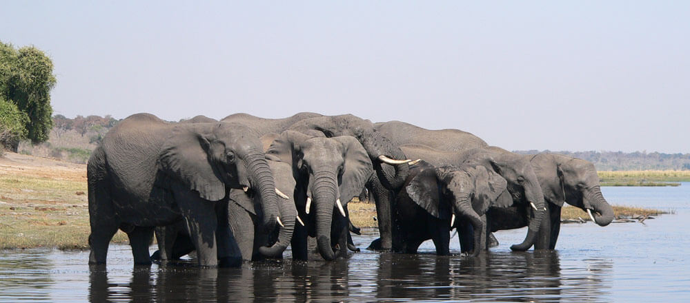 Chobe Nationalpark - Elefantenherden im Chobe Nationalpark in Botswana