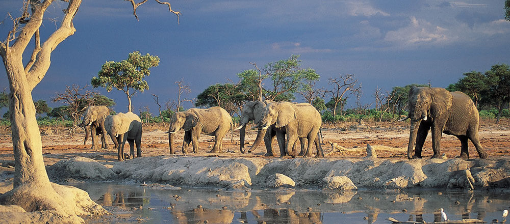Etosha Nationalpark - Elefanten am Wasserloch