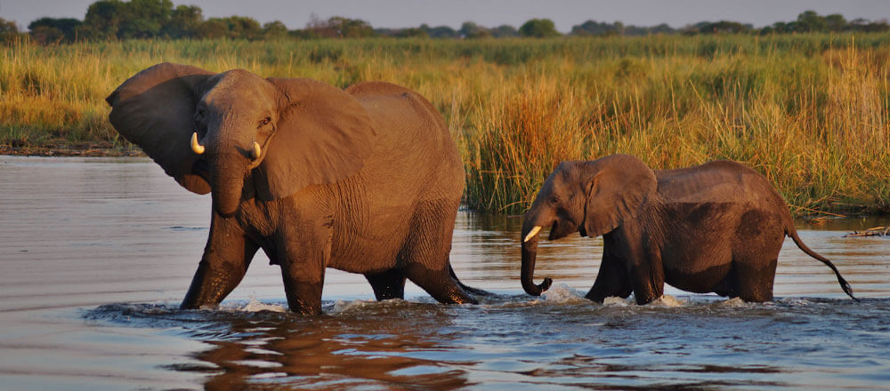 Chobe Nationalpark - Elefantenherden im Chobe Nationalpark